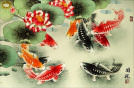 Koi Fish Asian Art